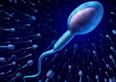 male-fertility
