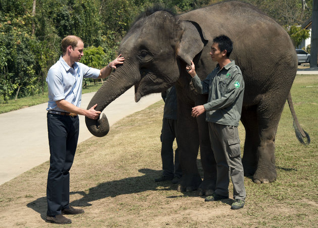 The Duke of Cambridge feeds carrots to Ran Ran, a 13-year-old female Elephant at Xishuangbanna sanctuary in southern China.