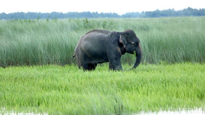160731085642_bd_bangla_elephant_640x360_bbc_nocredit